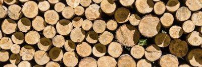 Skup drewna w tartaku
